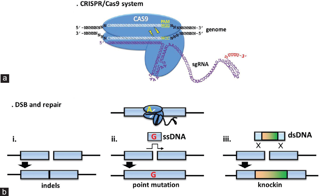 Advantages of using the CRISPR/Cas9 system of genome editing to