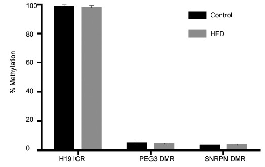 Figure 5: Results of pyrosequencing to investigate DNA methylation at genomic imprints in spermatozoa from obese and control rats. Data are mean ± s.d. H19-ICR is average of three CpG sites, Control <i>n</i> = 5, HFD <i>n</i> = 8. PEG3 DMR is average of four CpG sites, Control <i>n</i> = 8, HFD <i>n</i> = 8. SNRPN DMR is average of three CpG sites, Control <i>n</i> = 8, HFD <i>n</i> = 7. All imprints <i>P</i> > 0.4