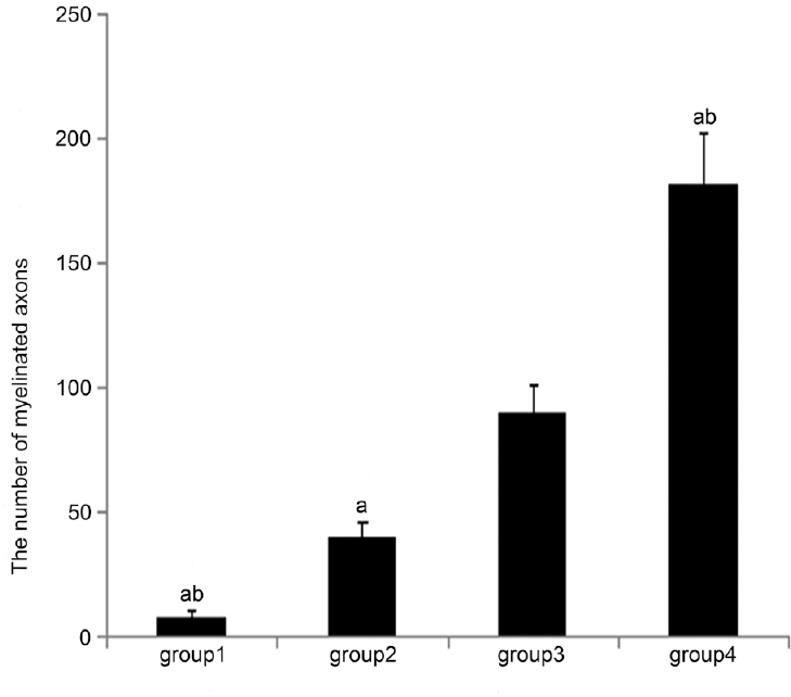 Figure 6: Number of myelinated axons of cavernous nerves in four groups. <sup>a</sup><i>P</i> < 0.01, versus Group 3; b<i>P</i> < 0.01, versus Group 2