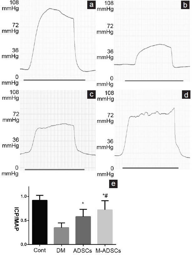 Figure 4: Erectile function evaluation. (a-d) Representative recording of ICP in response to electrostimulation of the cavernous nerve. (e) Results of erectile function expressed as the ICP/MAP ratio. *<i>P</i> < 0.05 compared with DM; <sup>#</sup><i>P</i> < 0.05 compared with ADSCs. Cont: normal control group; DM: diabetic group; ADSCs: ADSC-treated group; M-ADSCs: magnetic-targeted group. ICP: intracavernous pressure; MAP: mean arterial pressure.